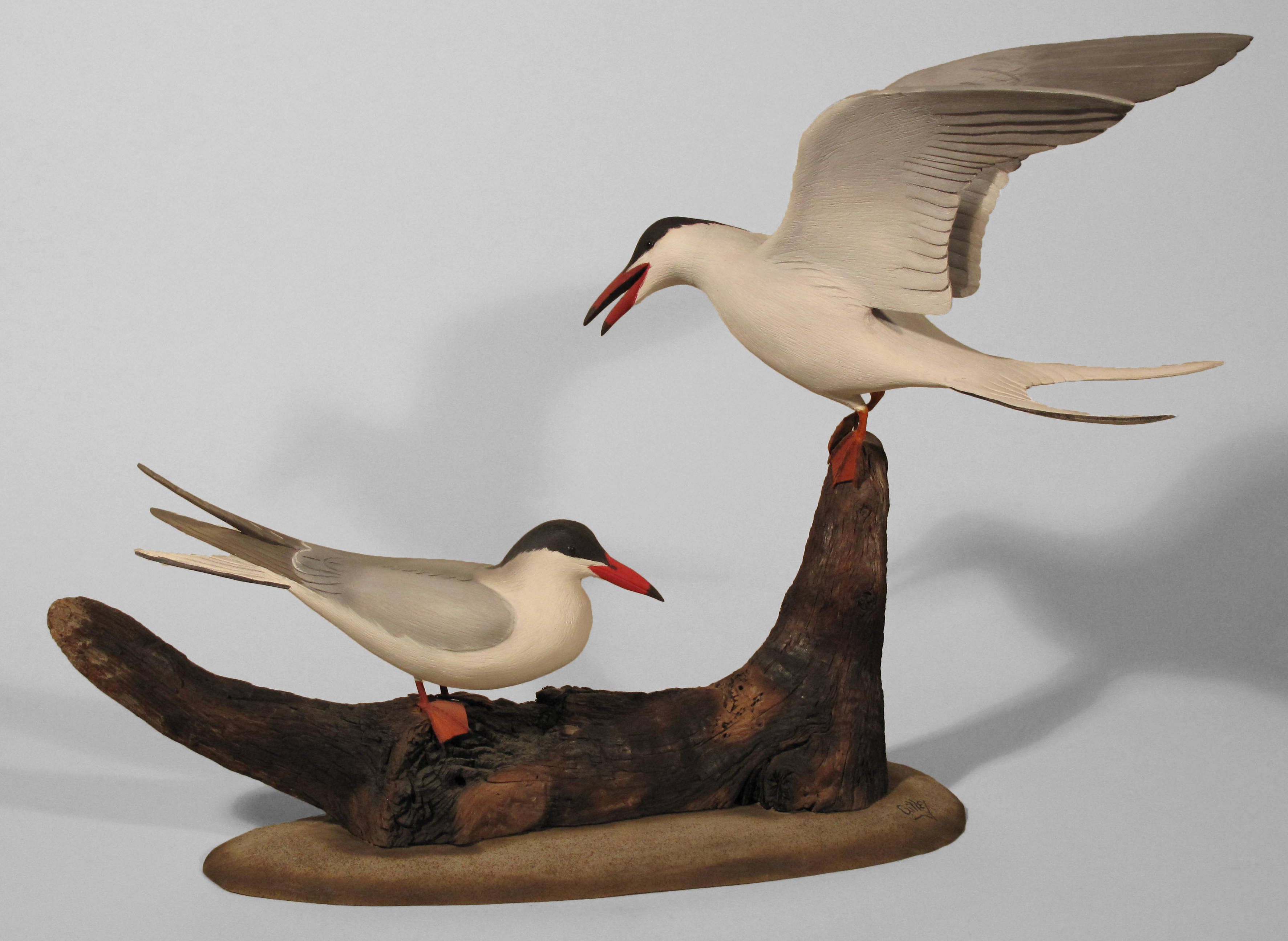 Common Tern, Pair