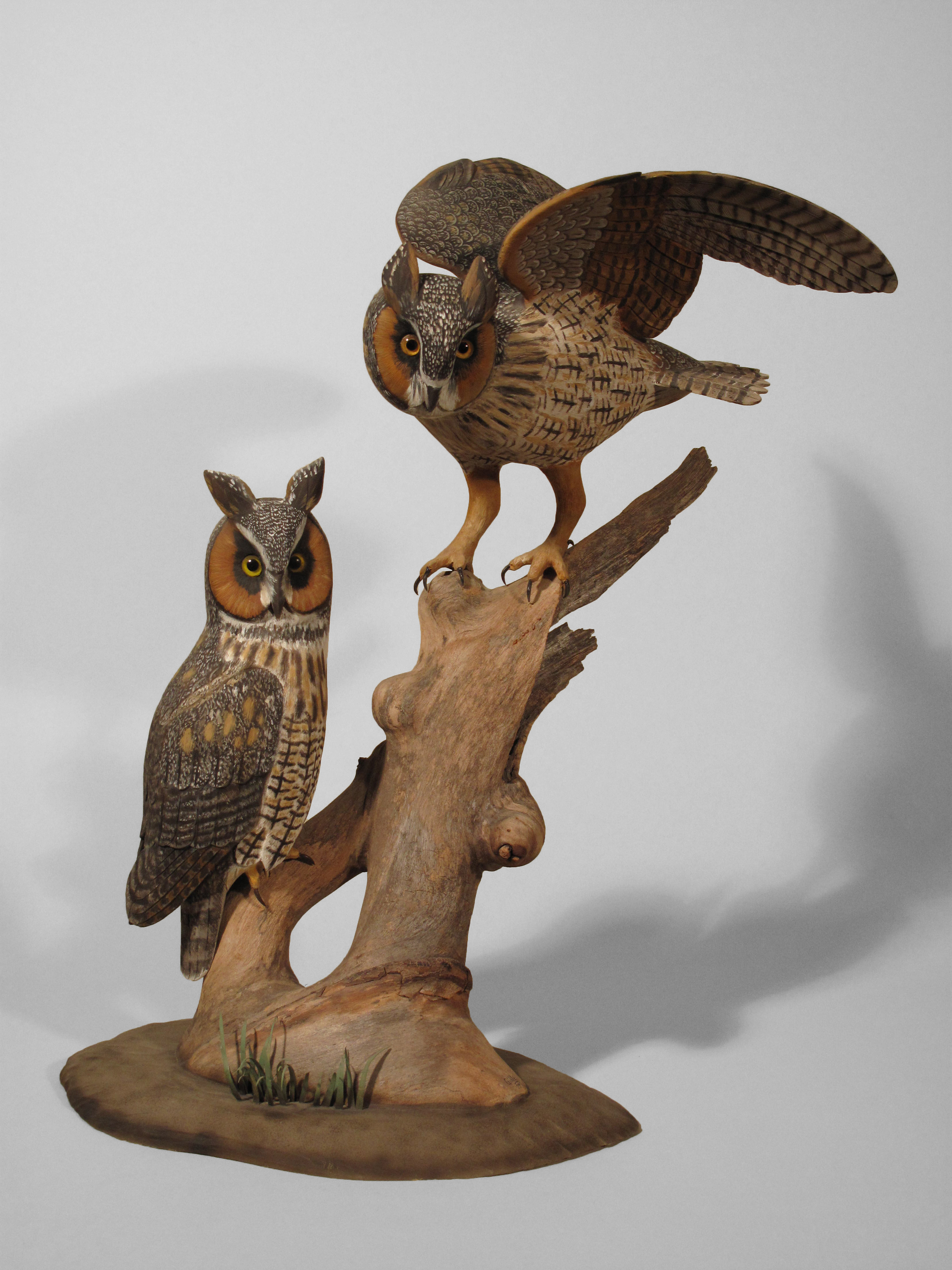 Long-eared Owl, Pair