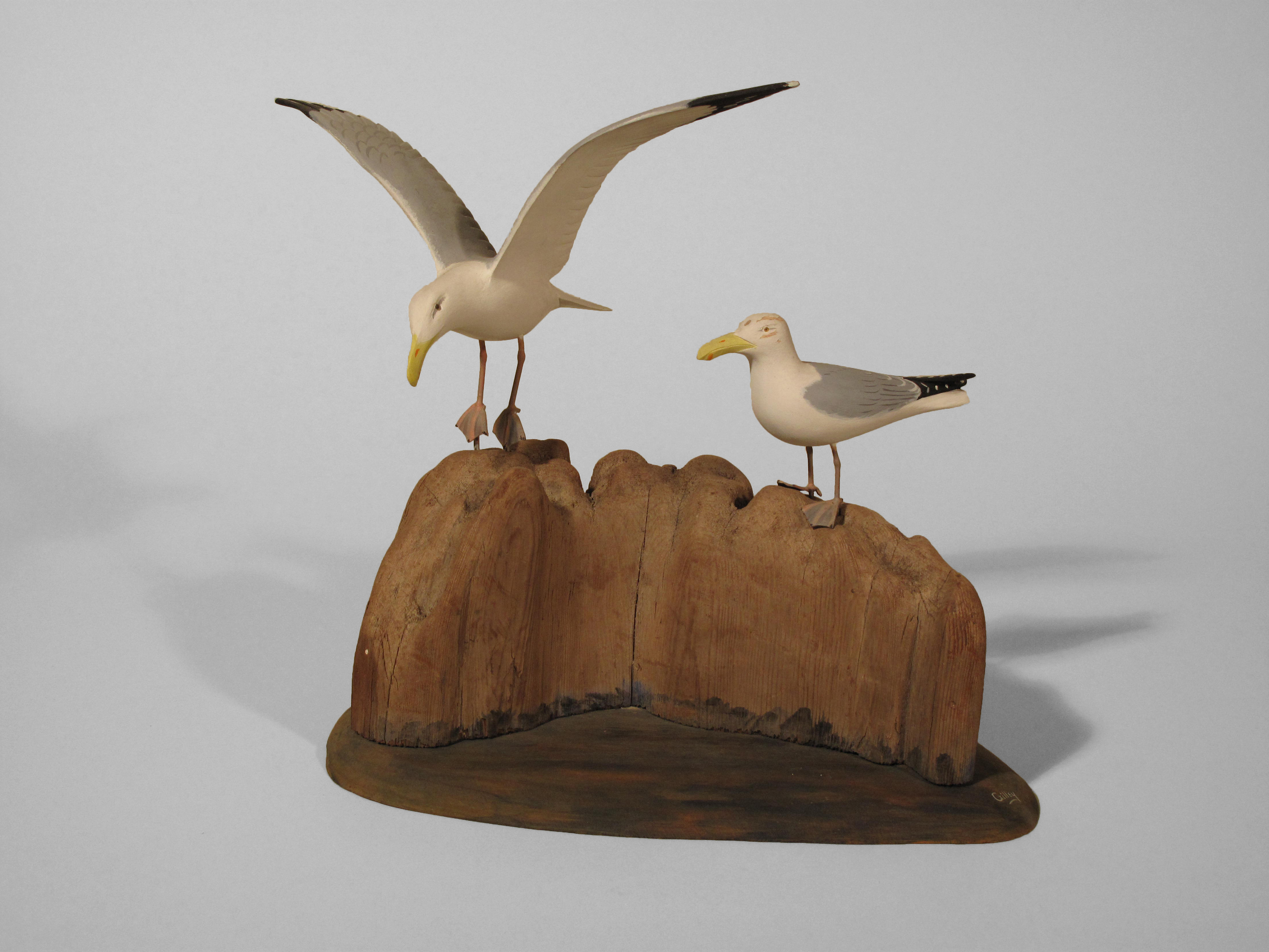 Herring Gull, Pair