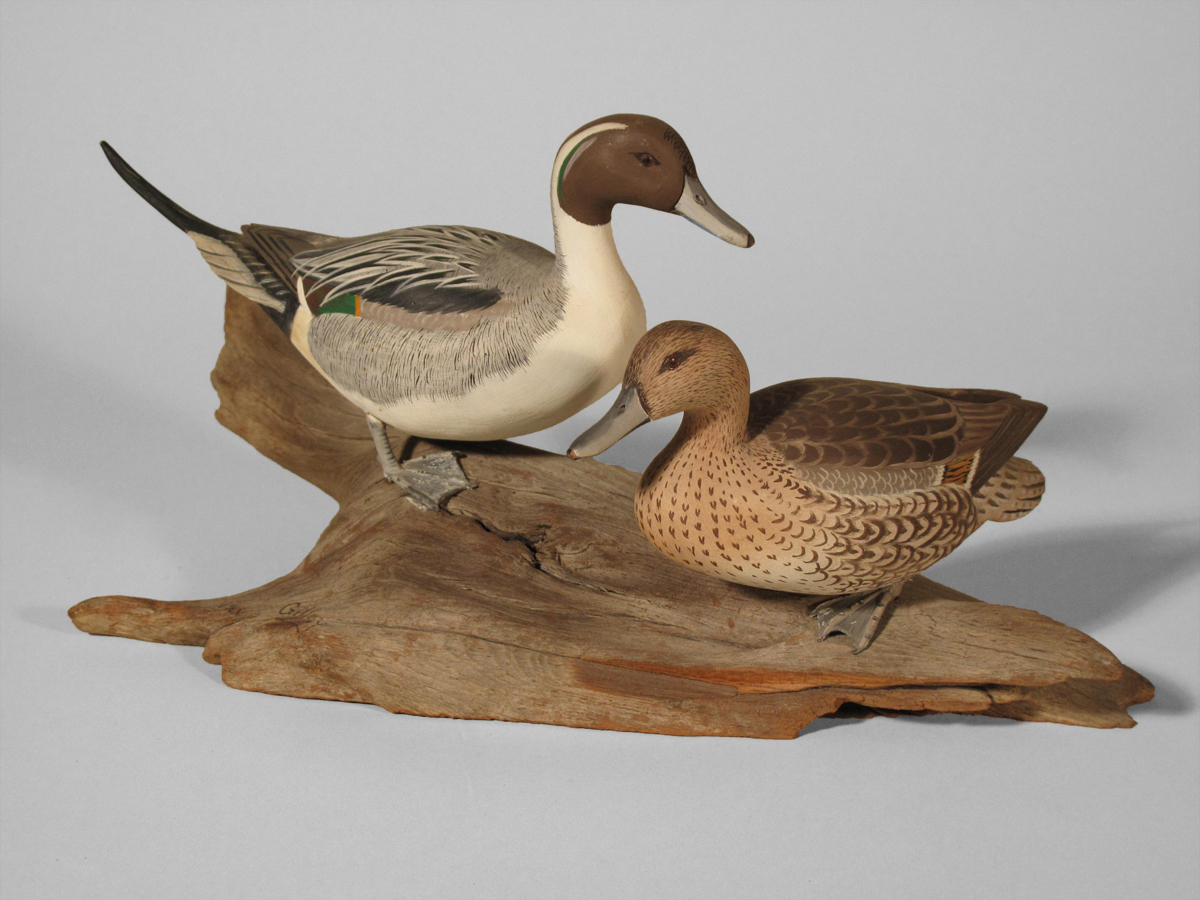 Pintail, Pair